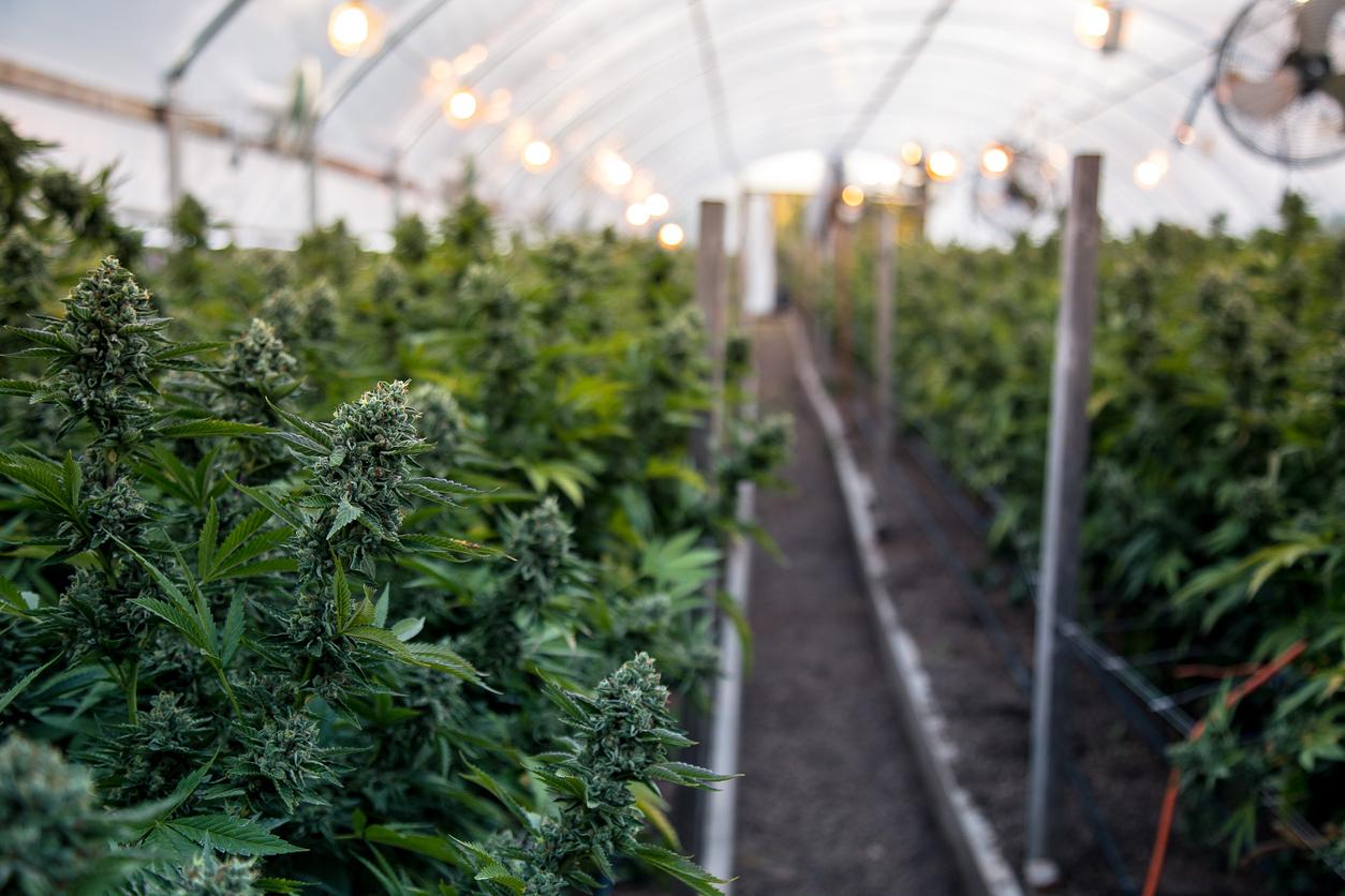 Бизнес по выращиванию марихуаны мемы про марихуану