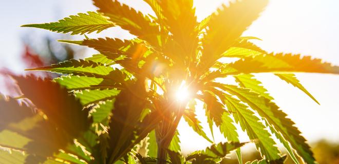 Сколько можно выращивать марихуаны в украине какое ощущение после конопли