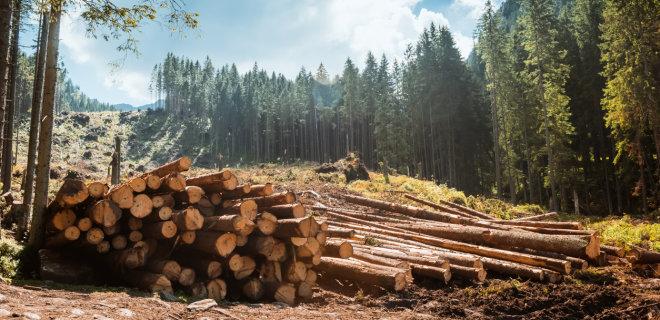 Экспорт рухнул: почему из Украины стали меньше вывозить леса - Фото