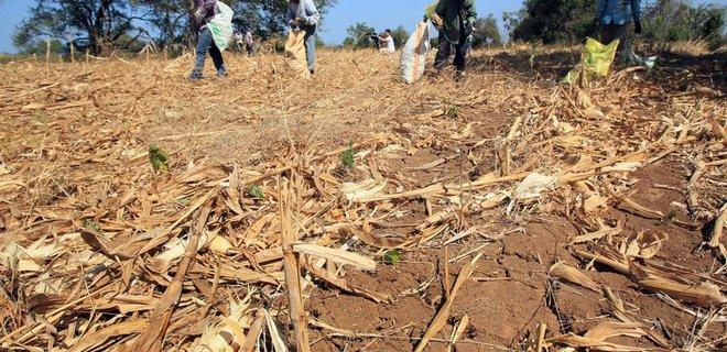 Природные катаклизмы уничтожают посевы: цены близки к рекорду за 10 лет – Bloomberg - Фото