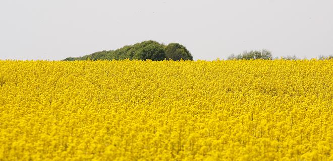 Капитализация украинских агрохолдингов пошла на спад - Фото