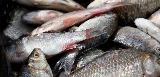 Из-за аннексии Крыма вылов рыбы в Украине сократился в 2,5 раза - Фото