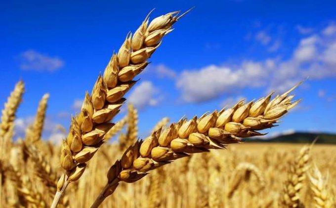 Рекорда не будет. Каковы урожайные перспективы Украины