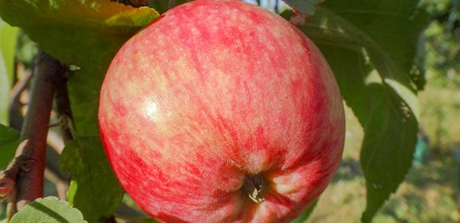 Украина увеличила экспорт плодово-ягодной продукции почти на 70% - Фото