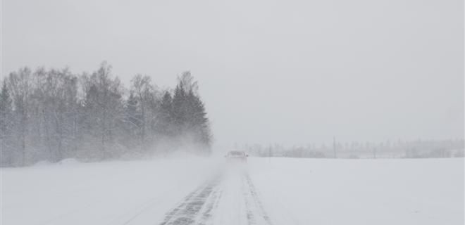 Мартовские морозы не повредили озимым посевам в Украине - Фото