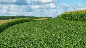 Украинцы стали лидерами по покупке земли в Польше