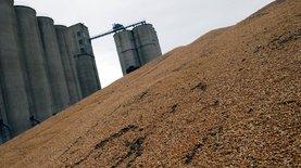 Вьетнам возобновил импорт украинской пшеницы