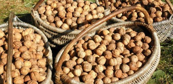 В Винницкой области появится завод по переработке грецких орехов - Фото